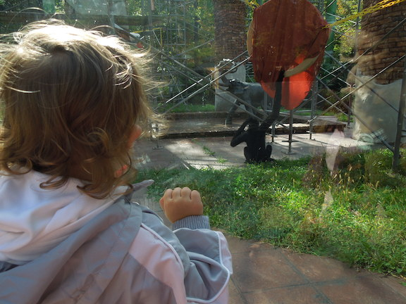 my first visit to the zoo in india Essay on visit to a zoo | my first visit to zoo | experience about visit to a zoo  india home essay / paragraph / note essay on visit to a zoo | my first visit.